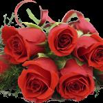 Какого цвета розы подарить девушке