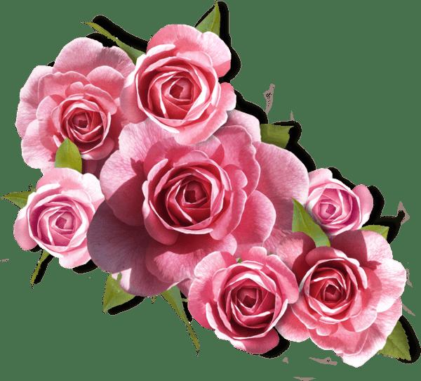 Какого цвета подарить розы девушке
