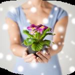Какой комнатный цветок подарить маме?!