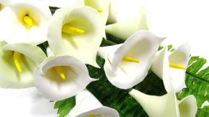Белые каллы в подарок учителю