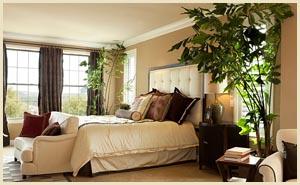 Можно ли держать цветы в спальне